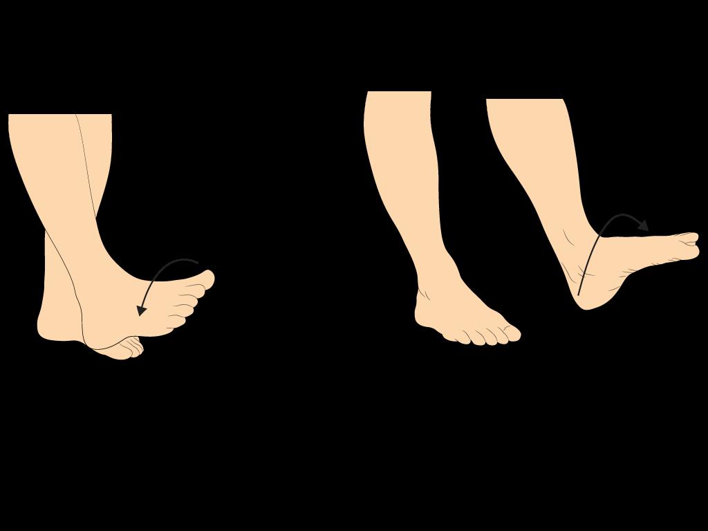 Fußkreisen